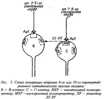 синаптического контакта с
